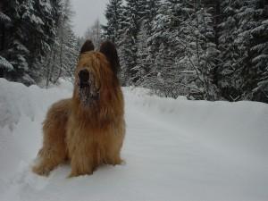 chester Briard, snow