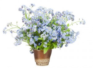 Bouquet from Forget-me-nots (Myosotis)