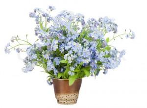 Bouquet from Forget-me-nots (Myosotis)