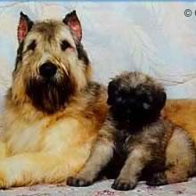 adopt a dog5