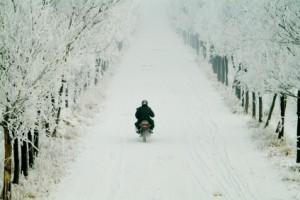 winterscape503