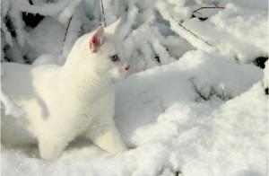 catsnow