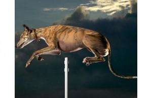 amazing dogs 11