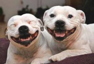 amazing dogs 5