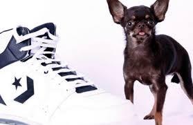 amazing dogs12
