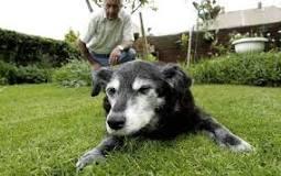 amazing dogs2