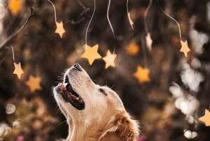 amazing dogs4