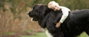boy-hugging-newfoundland