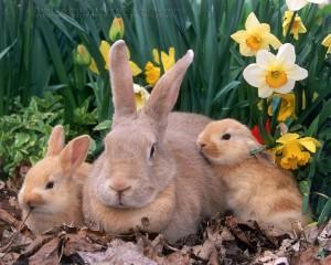 bunny 100