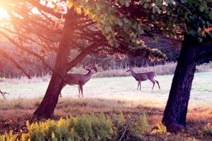 deer100