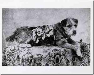 history dog5