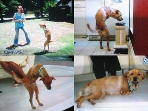 histroy dog 7